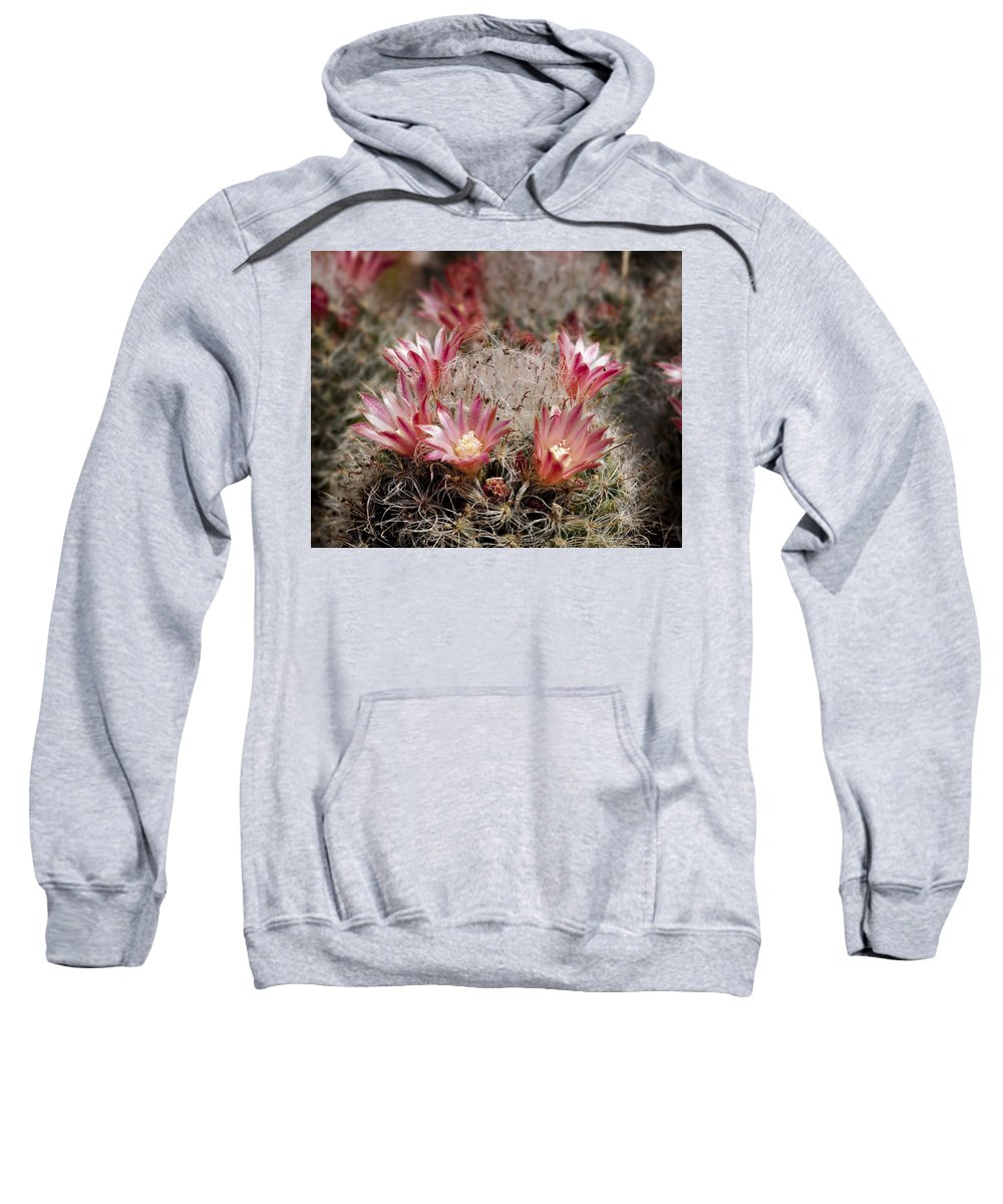 Cactus Sweatshirt featuring the photograph Pink Cactus Flowers 2 by Kelley King
