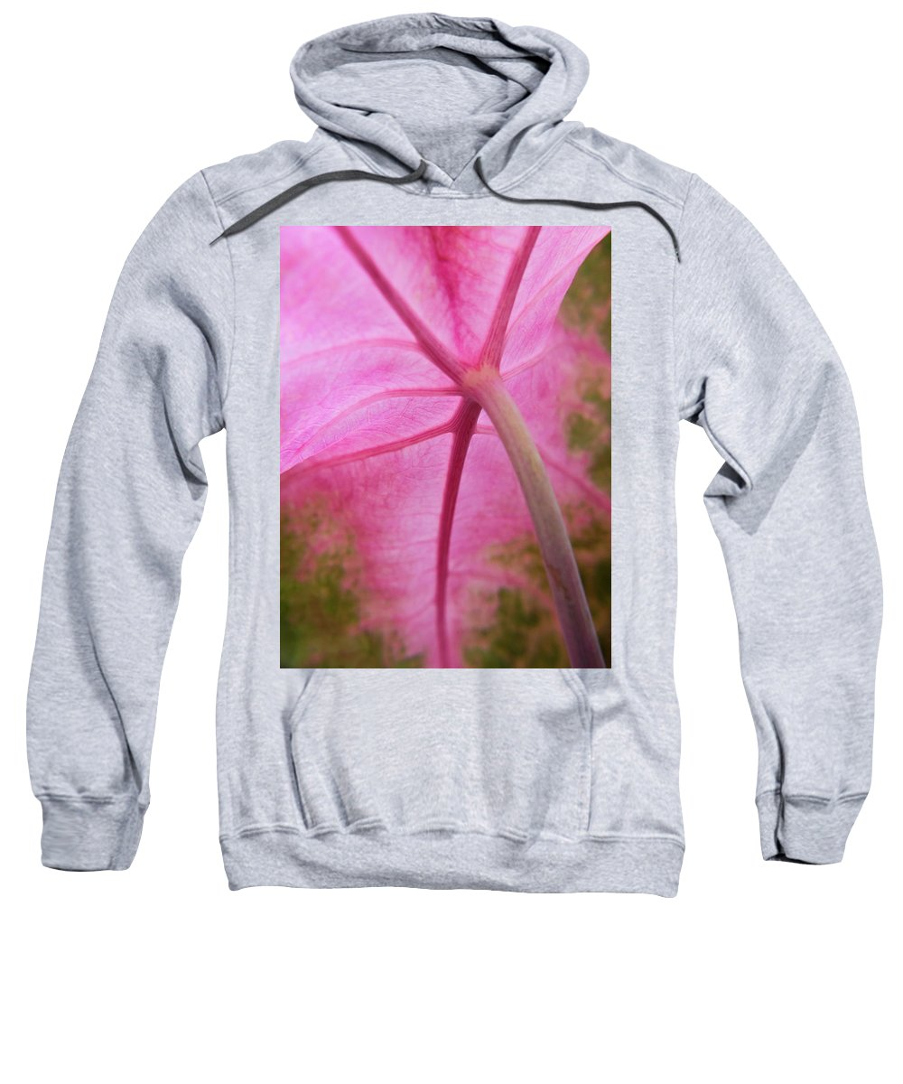 Pink Coleus Sweatshirt featuring the photograph Pink Coleus by Diane Moore