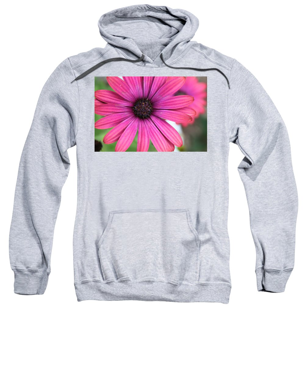 Daisy Sweatshirt featuring the photograph Pink Daisy by Lauri Novak