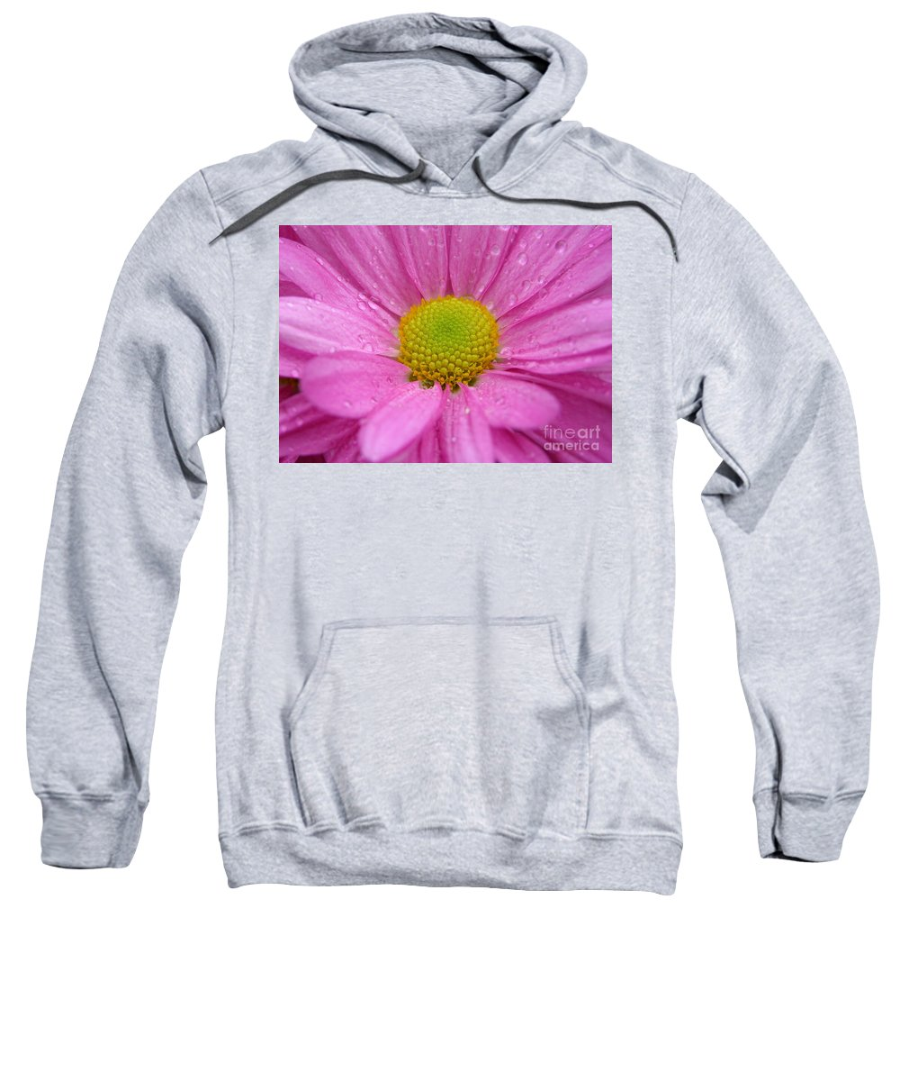 Pink Daisy Sweatshirt featuring the photograph Pink Daisy With Raindrops by Carol Groenen
