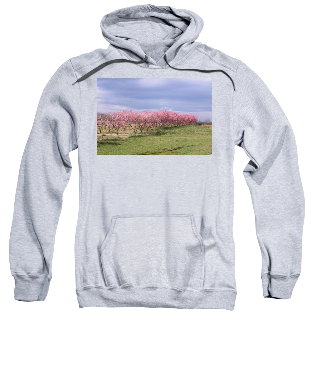 Pink Pears Trees Sweatshirt featuring the photograph Pink Pear Trees by Karen Ruhl