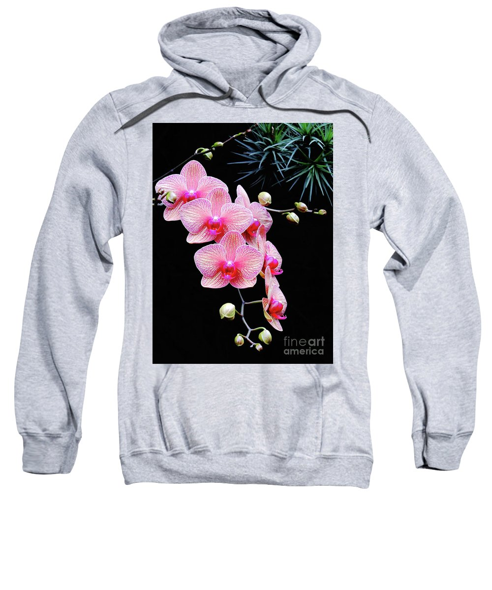 Pink Flower Sweatshirt featuring the photograph Pink Flowers Pink Vein Black Background by Ron Tackett