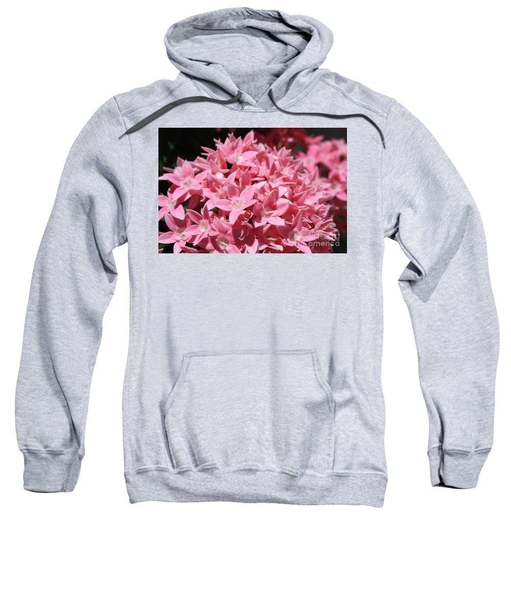 Pink Pentas Sweatshirt featuring the photograph Pink Pentas Beauties by Carol Groenen