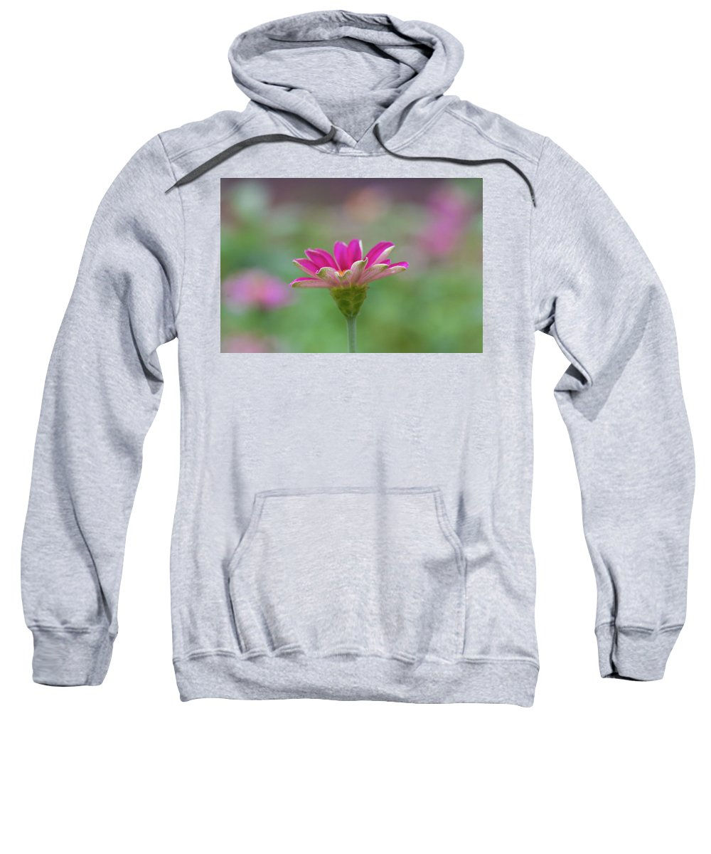Pink Flower Sweatshirt featuring the photograph Pink Zin by Kelly Foreman