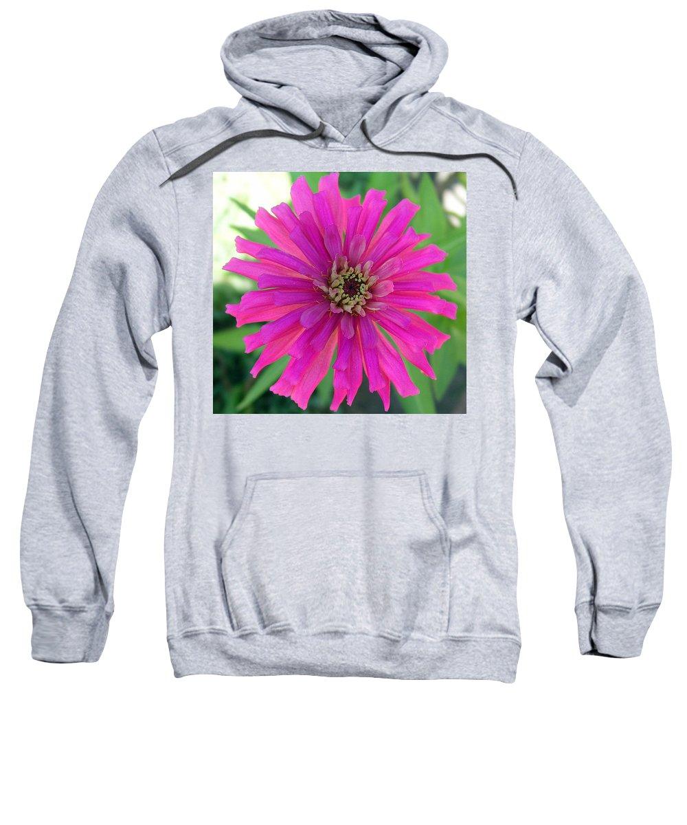 Zinnia; Flower; Pink; Translucent; Transparent; Florida; Petals; Garden; Zinnia; Agustifolia; Flower Sweatshirt featuring the photograph Pink Zinnia In Florida by Allan Hughes