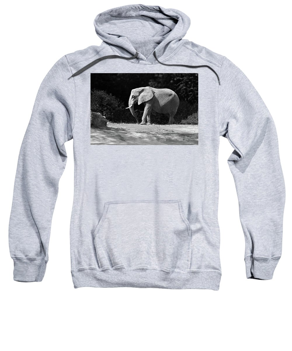 Elephant Sweatshirt featuring the photograph Placid Pachyderm by Paul Conner