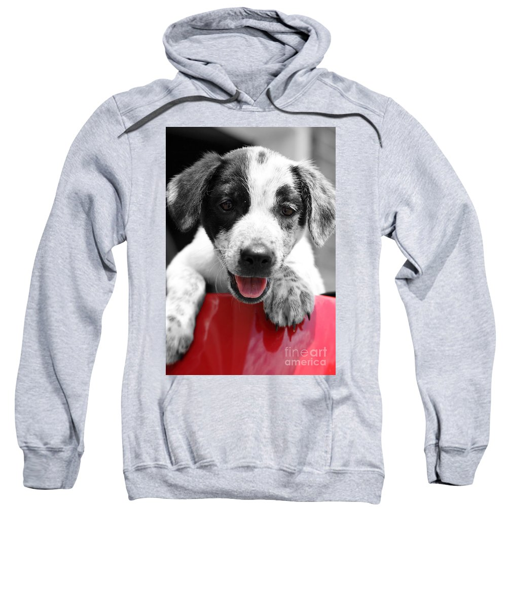 Puppy Sweatshirt featuring the photograph Playing by Amanda Barcon