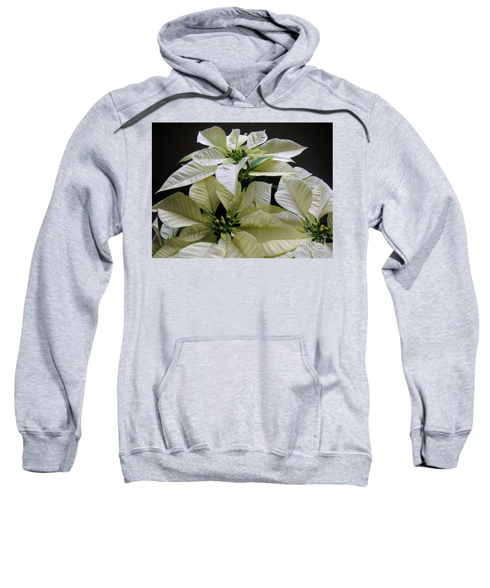 Nature Sweatshirt featuring the photograph Poinsettias - Winter White At Night by Lucyna A M Green