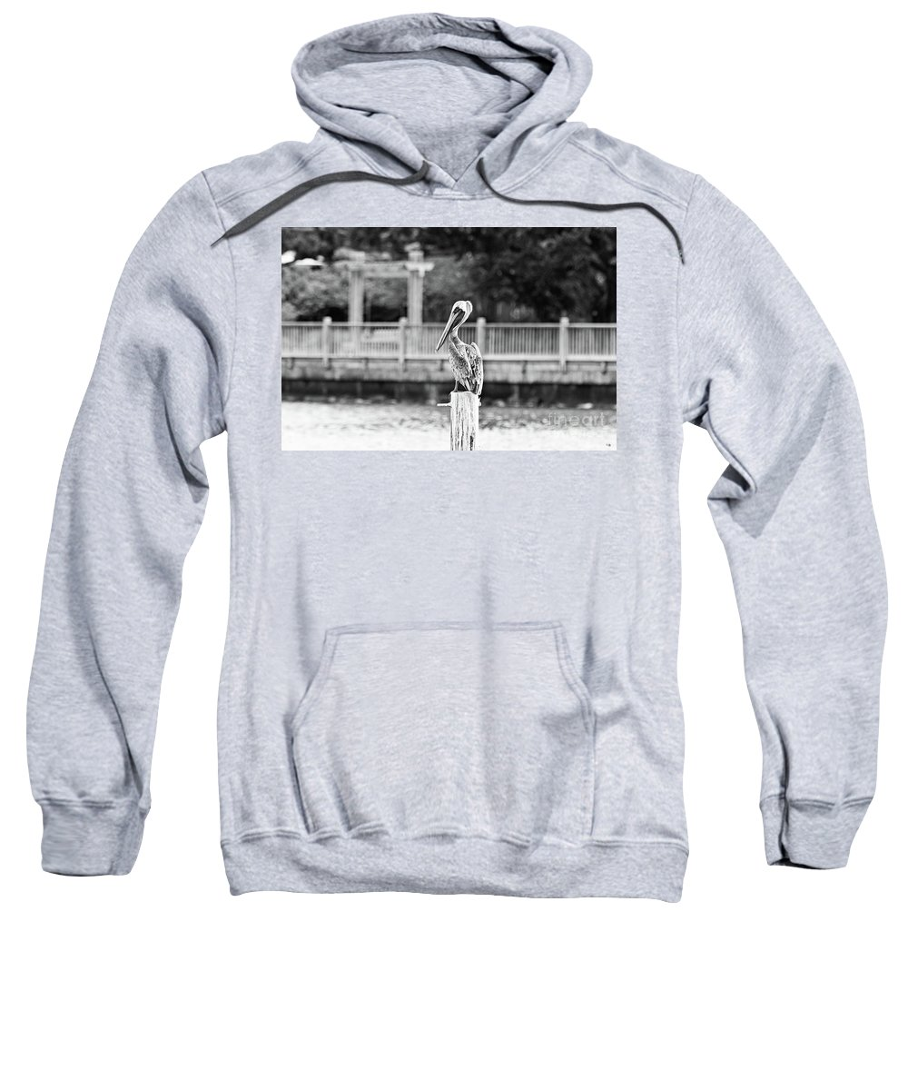 Pelican Sweatshirt featuring the photograph Point Clear Alabama Brown Pelican - Bw by Scott Pellegrin