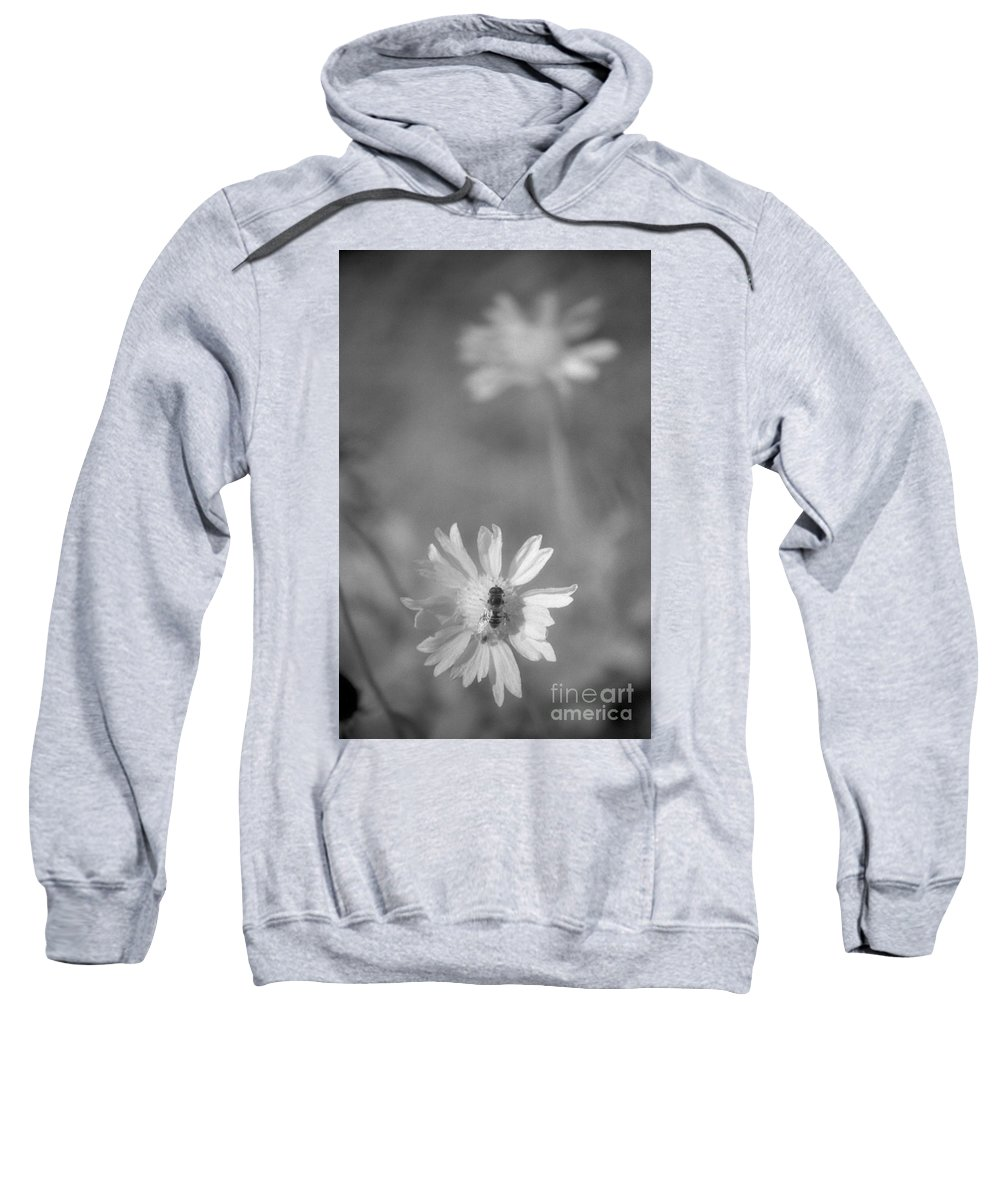 Pollinate Sweatshirt featuring the photograph Pollination by Richard Rizzo