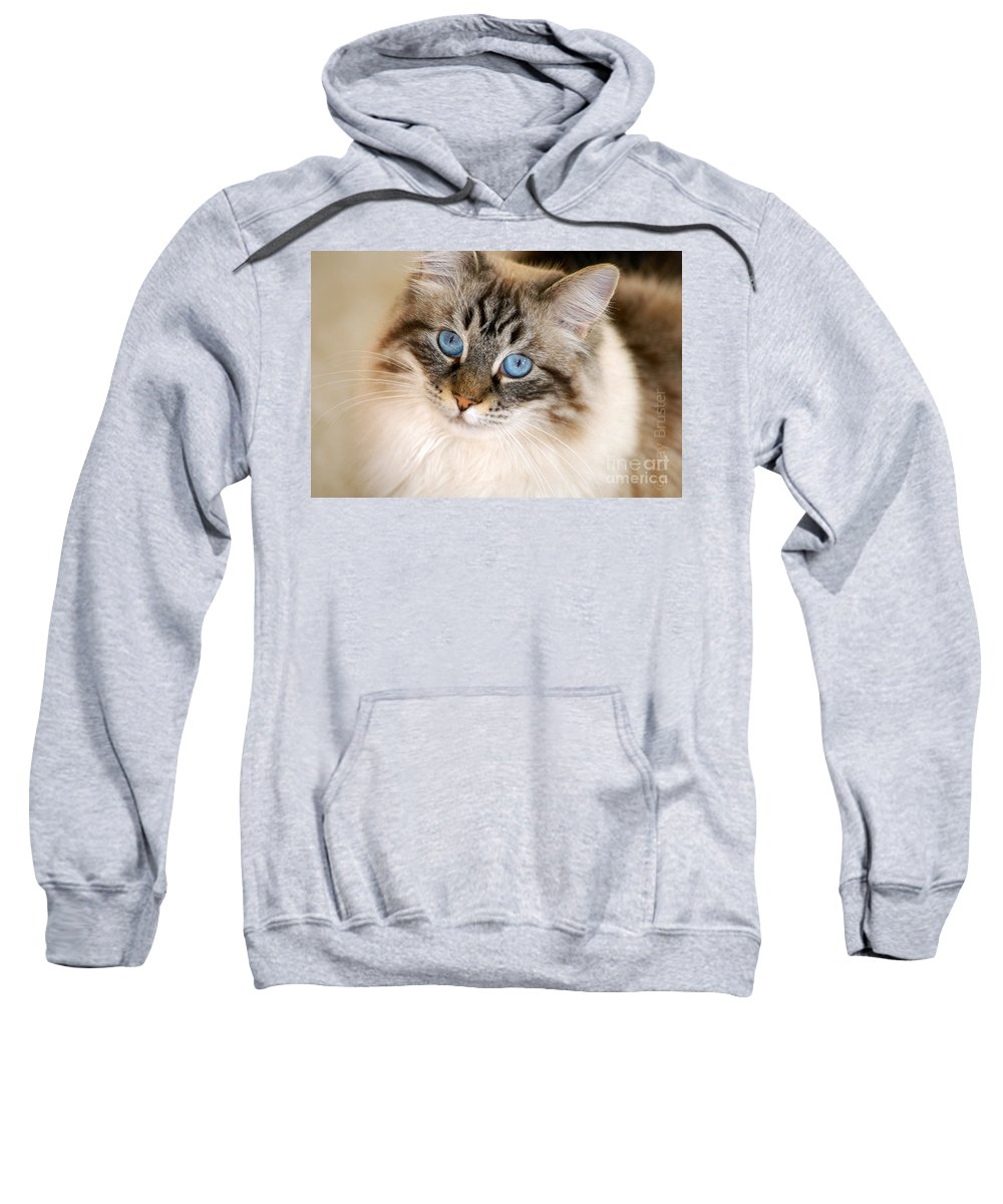 Clay Sweatshirt featuring the photograph Polly by Clayton Bruster