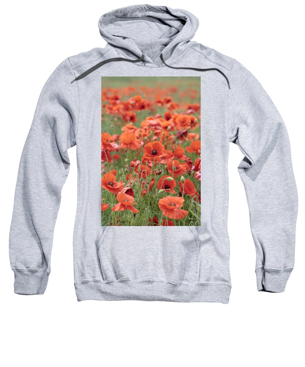 Poppy Sweatshirt featuring the photograph Poppies by Phil Crean