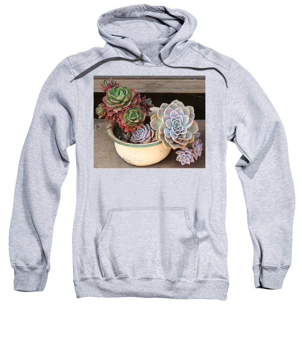 Plant Sweatshirt featuring the photograph Potty For Plants by Lene Pieters