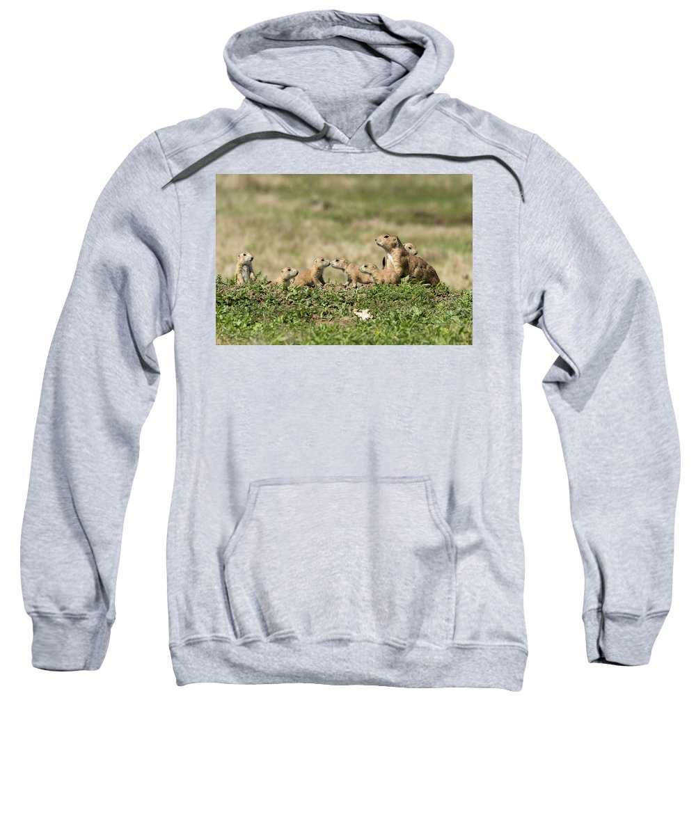 Nature Sweatshirt featuring the photograph Prairie Dog Family 7270 by Donald Brown