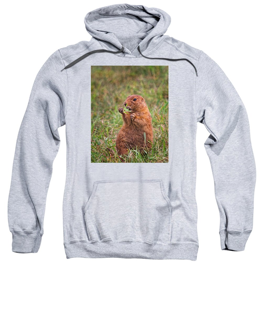 Prairie Dog Sweatshirt featuring the photograph Prairie Dog Feeding by Timothy Flanigan and Debbie Flanigan Nature Exposure