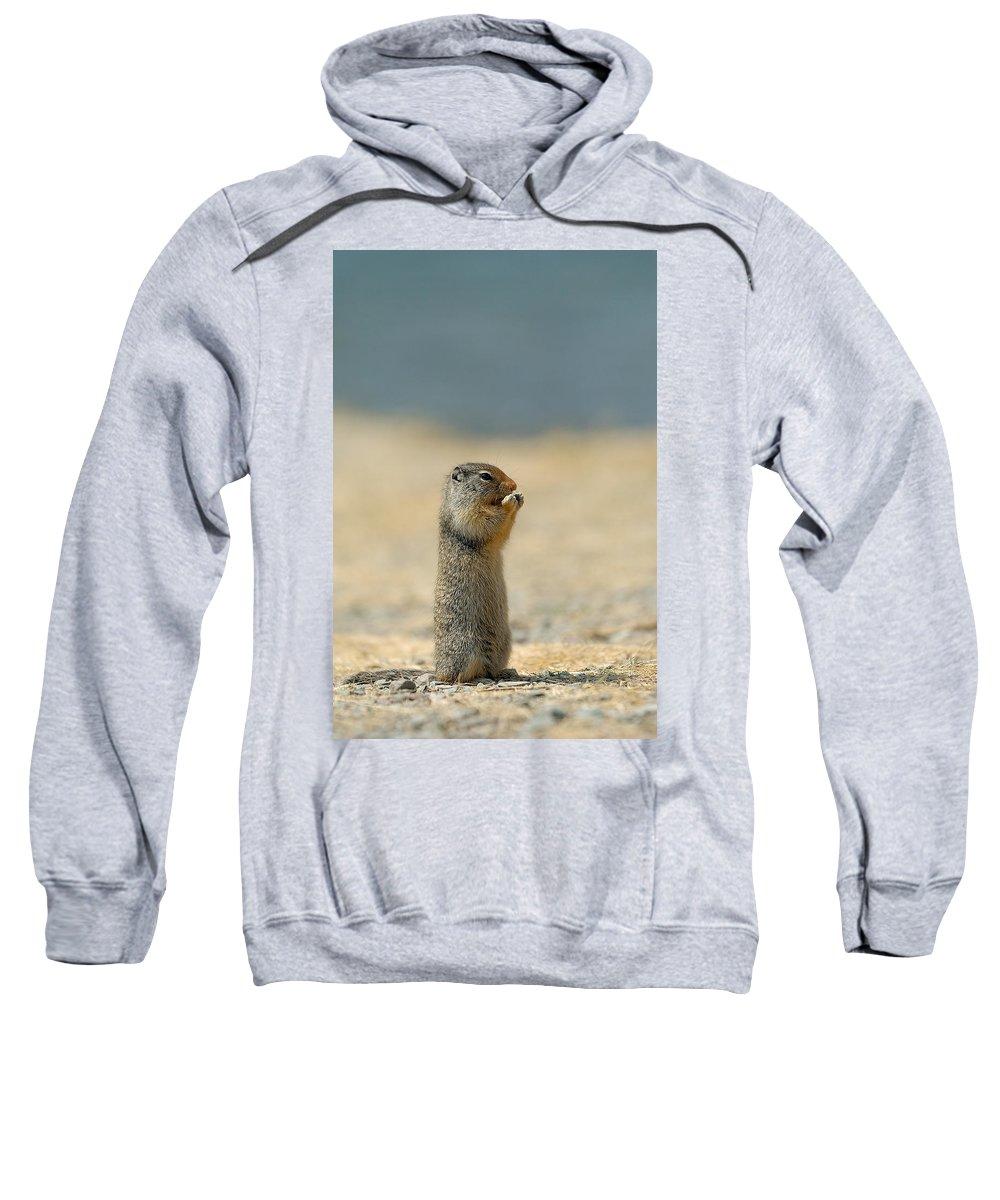 Prairie Dog Sweatshirt featuring the photograph Prairie Dog by Sebastian Musial