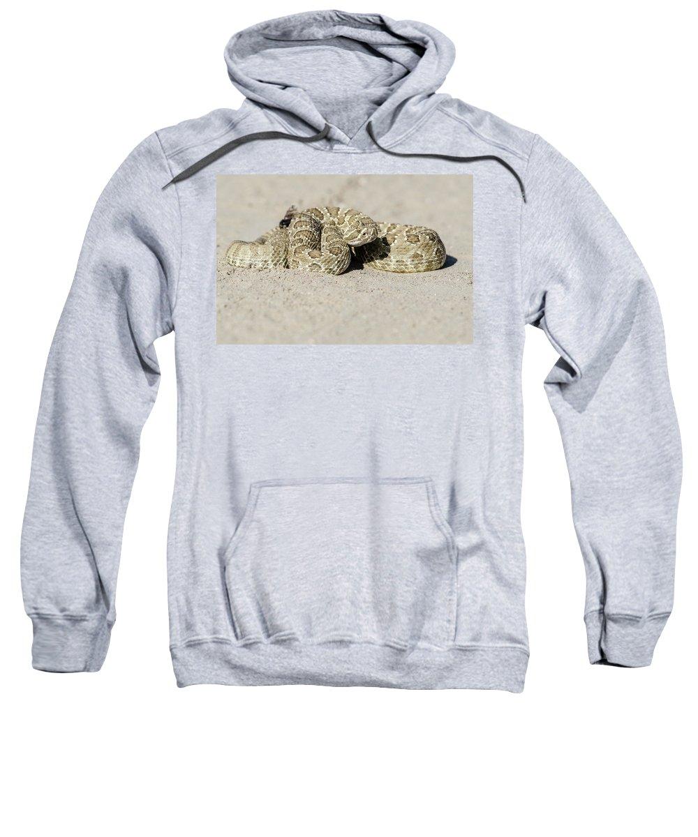 Prairie Rattlesnake Sweatshirt featuring the photograph Prairie Rattlesnake by Chris Augliera