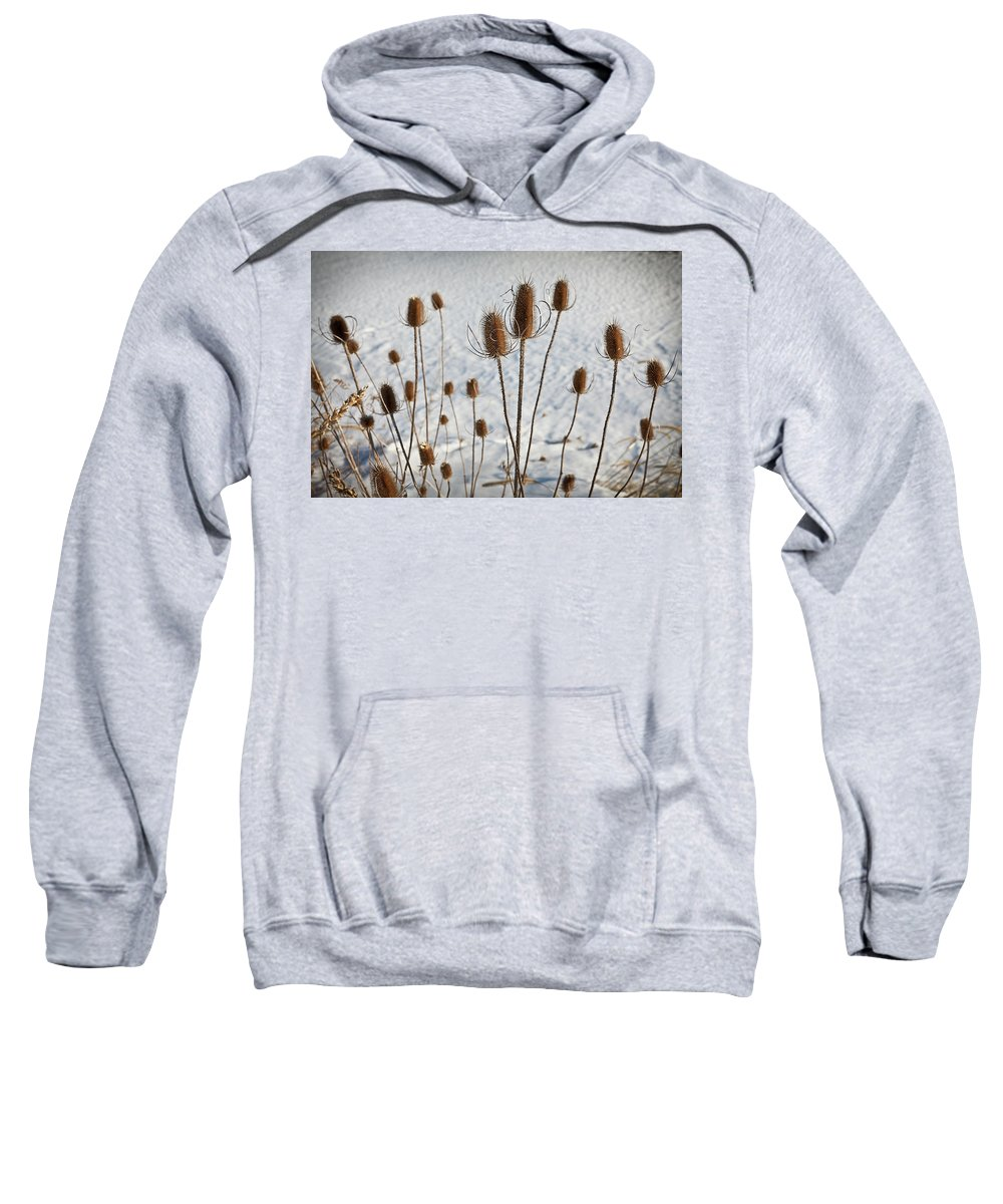Winter Sweatshirt featuring the photograph Prairie Seedheads by Steve Gadomski