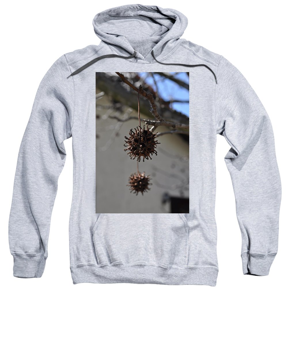 Pod Sweatshirt featuring the photograph Prickly Liquidamber Pod by Bridgette Gomes