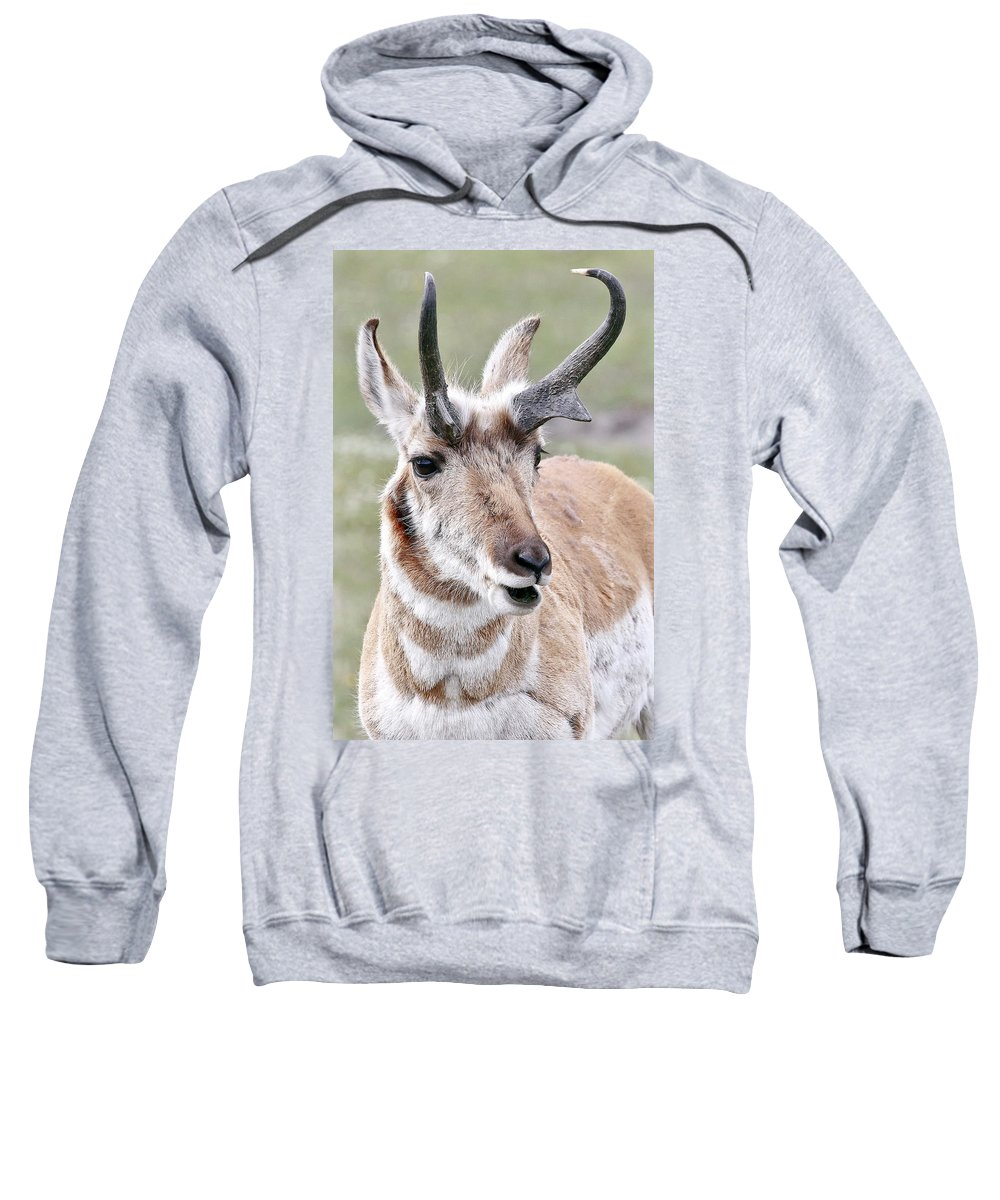 Pronghorn Sweatshirt featuring the photograph Pronghorn by Athena Mckinzie