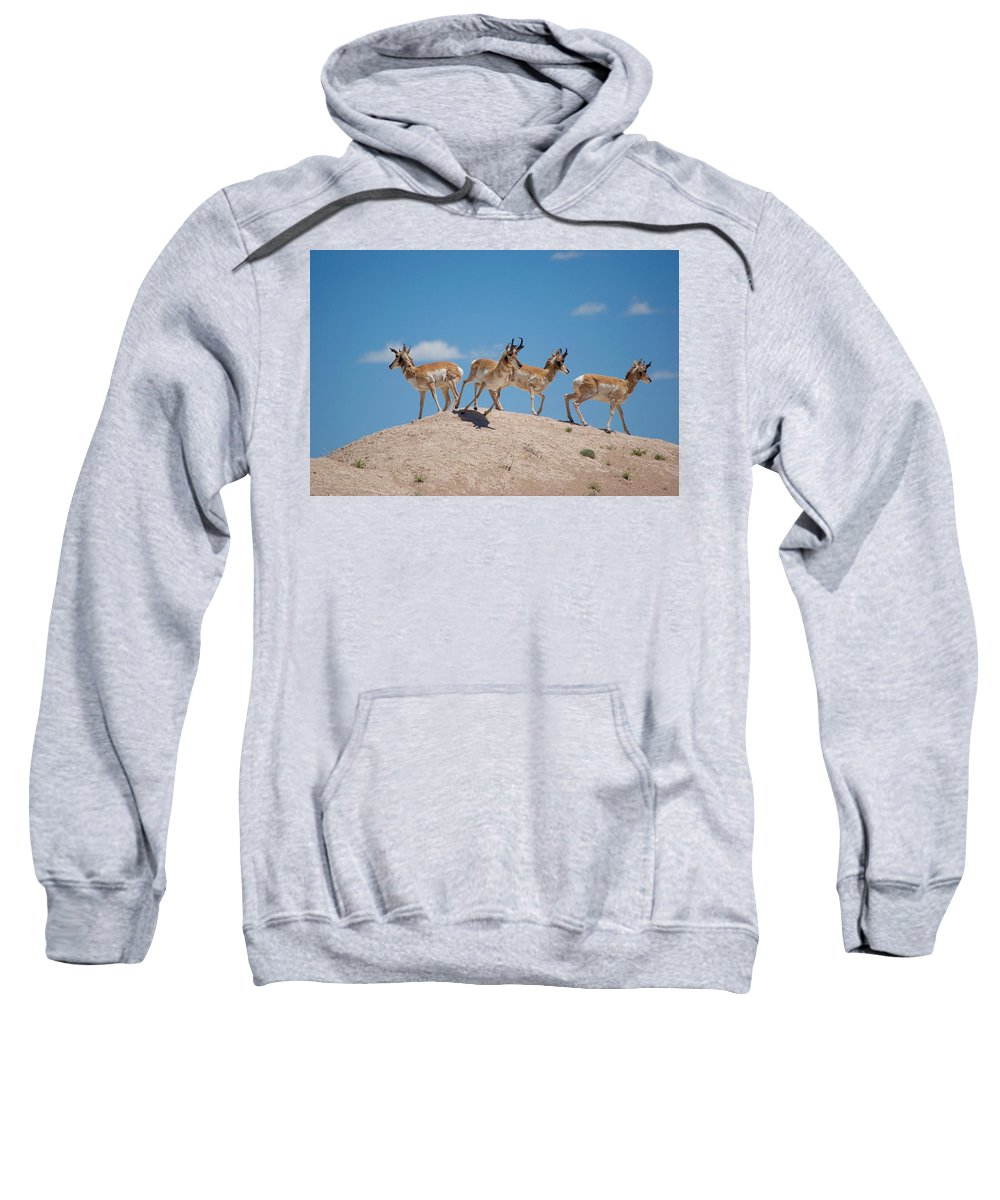 Pronghorn Sweatshirt featuring the photograph Pronghorn Scatter by Nathan Cowan