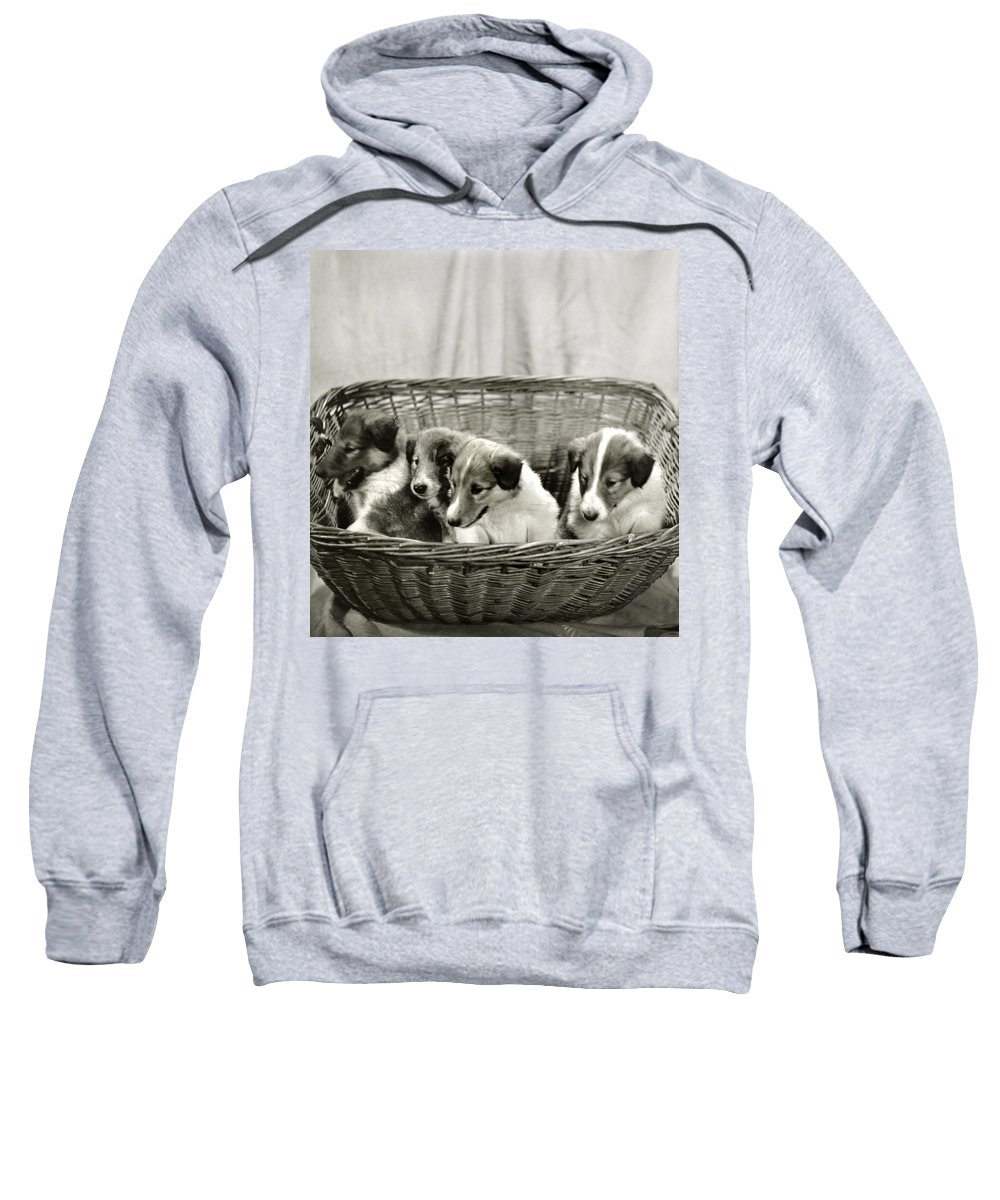 Vintage Sweatshirt featuring the photograph Puppies Of The Past by Marilyn Hunt