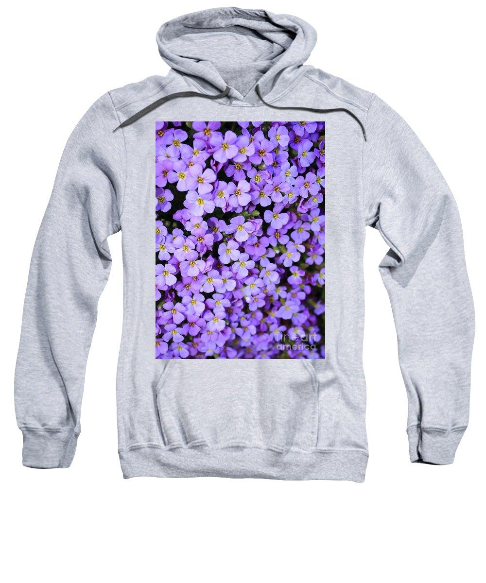 Purple Sweatshirt featuring the photograph Purple Flowers - Rockcress by Carol Groenen