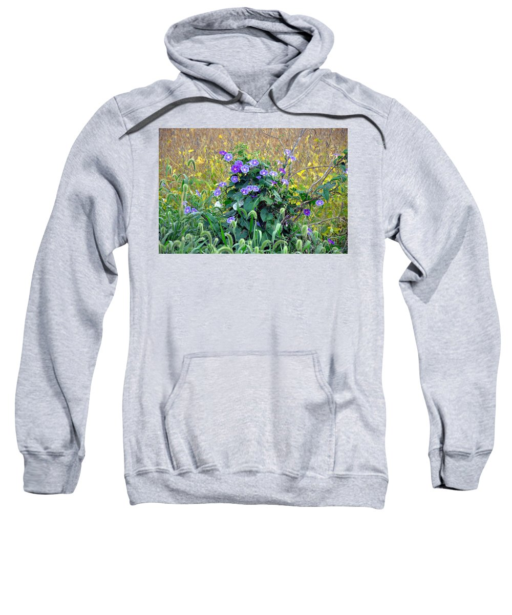 Morning Glory Sweatshirt featuring the photograph Purple In The Morning by Brittany Horton