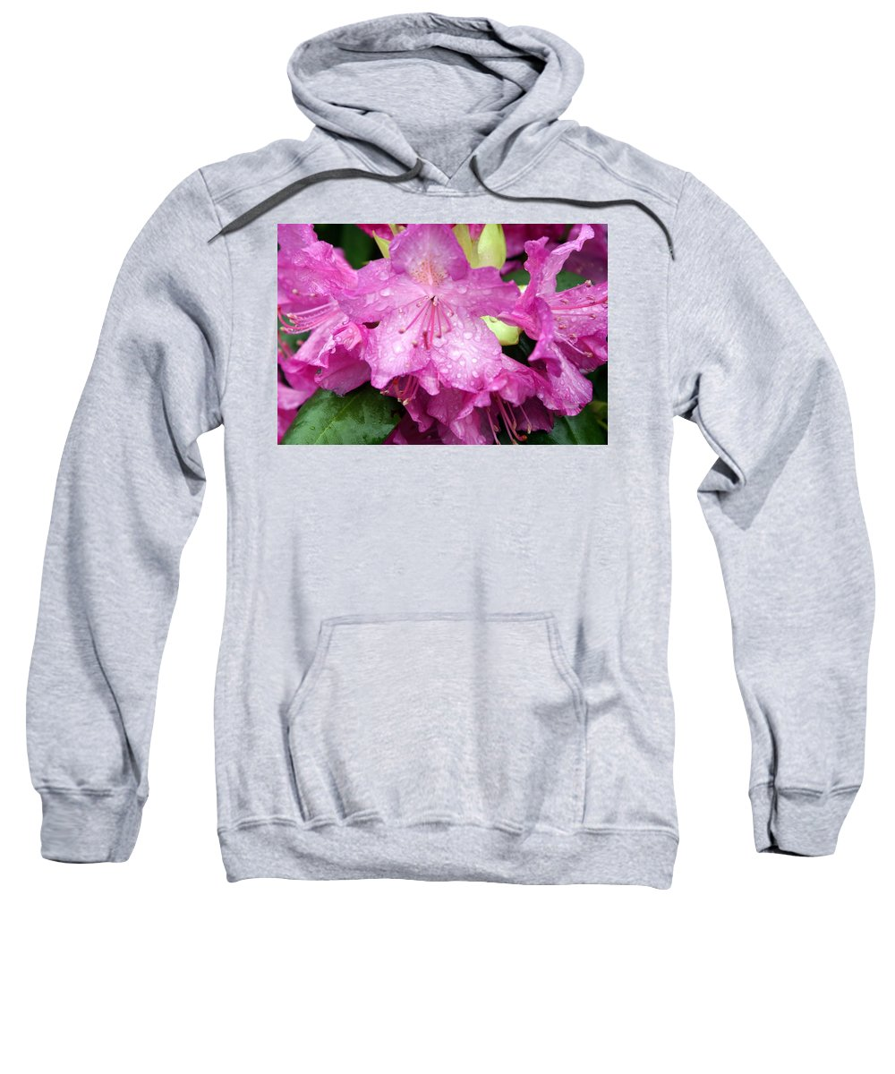 Flowers Sweatshirt featuring the photograph Purple Pink Horizontal by Marty Koch