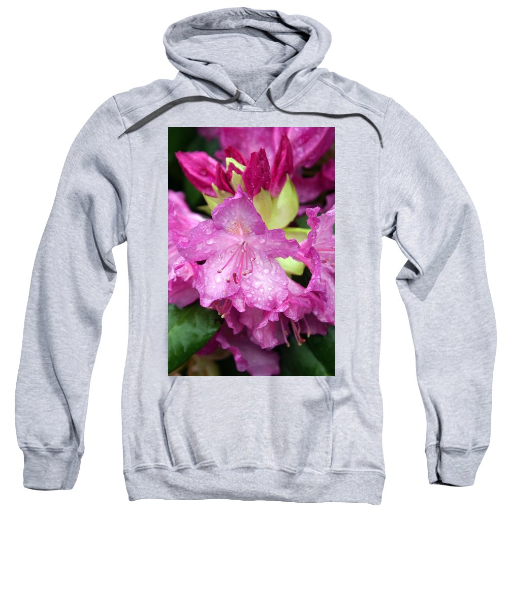 Fllowers Sweatshirt featuring the photograph Purple Pink by Marty Koch