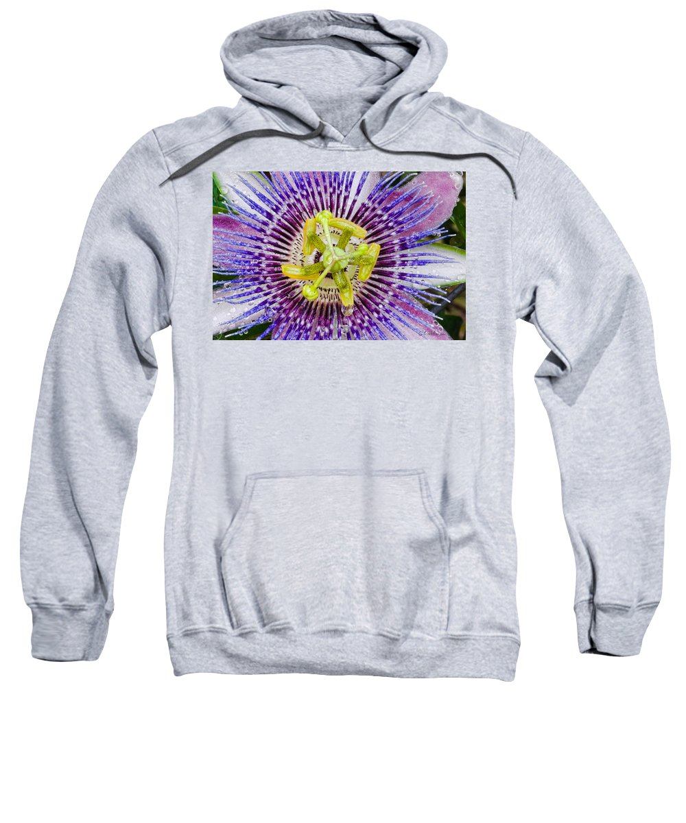 Passion Sweatshirt featuring the photograph Purple Radial by Christopher Holmes