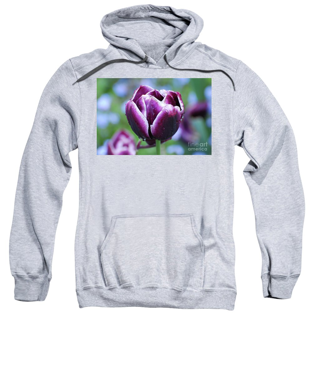 Tulip Sweatshirt featuring the photograph Purple Tulips With Dew Drops On The Outside Of The Petals by DejaVu Designs