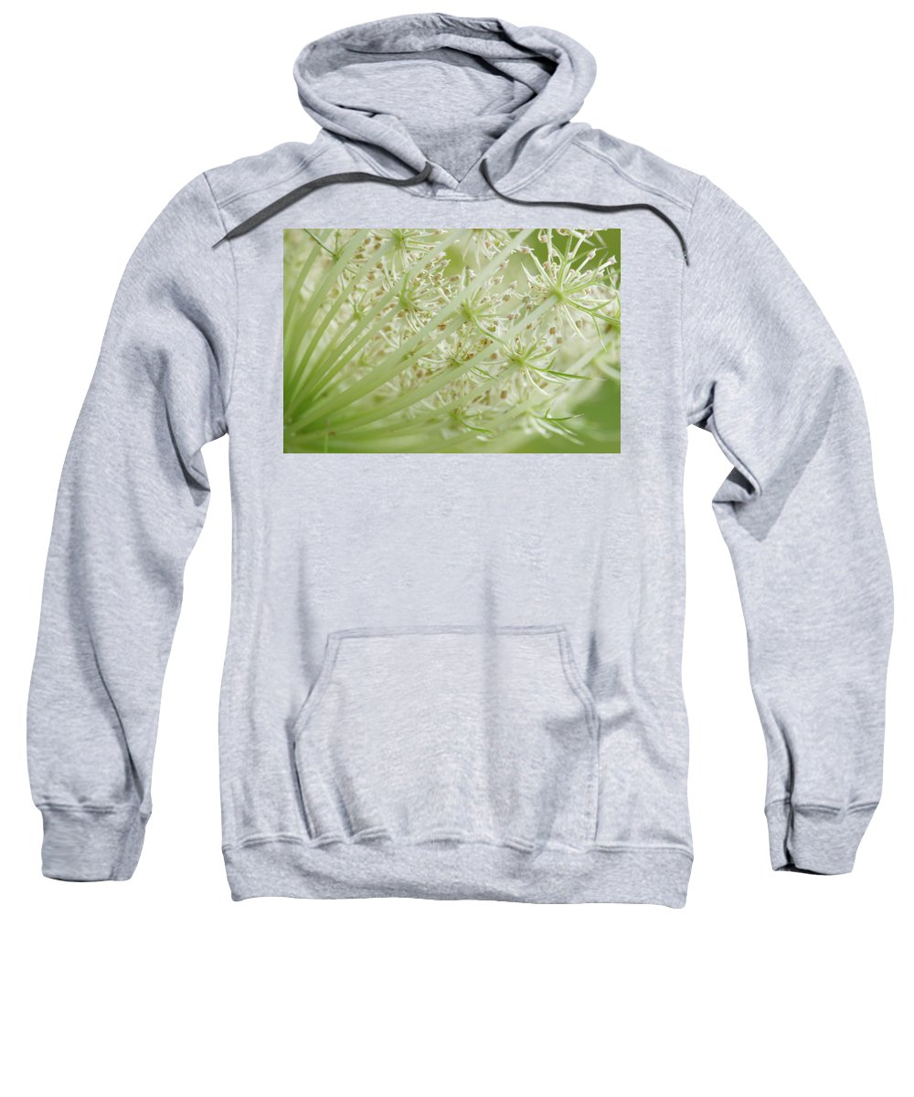 Cindi Ressler Sweatshirt featuring the photograph Queen Anne's Lace by Cindi Ressler