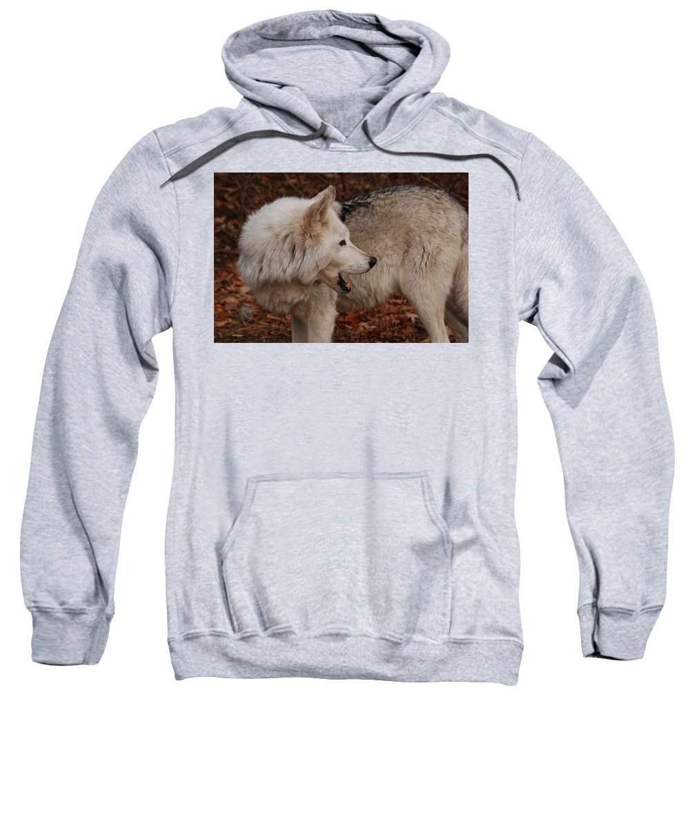 Wolf Sweatshirt featuring the photograph Quiet Back There by Lori Tambakis