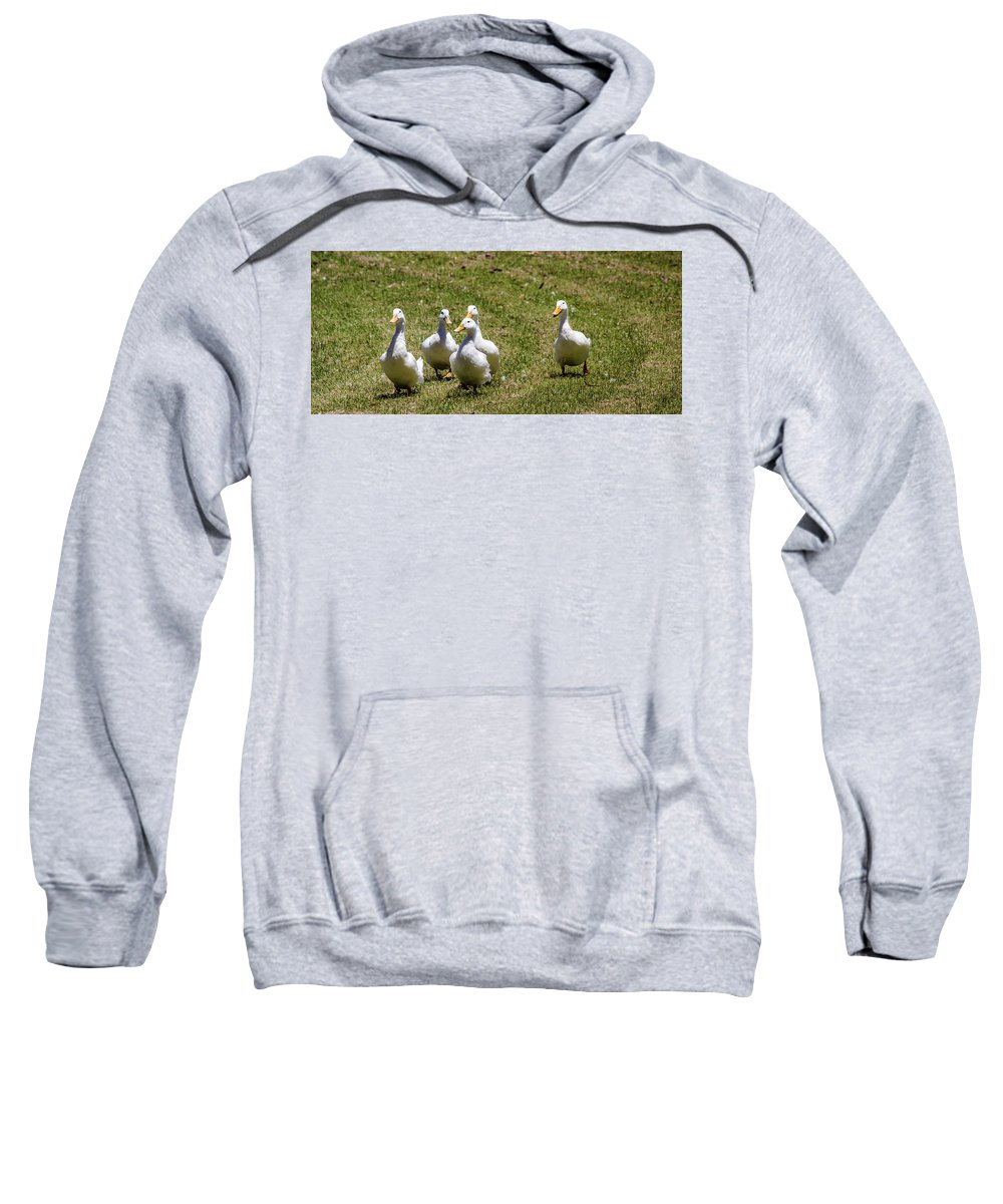 Ducks Sweatshirt featuring the photograph Race Day by Tania Read