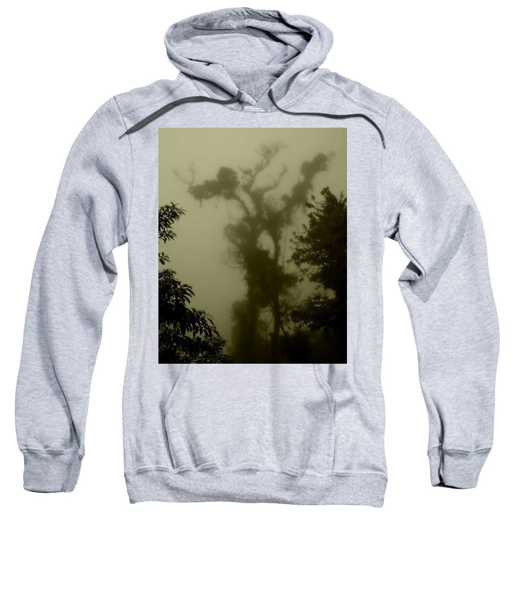 Tree Sweatshirt featuring the photograph Rainforest IIi by Perry Webster