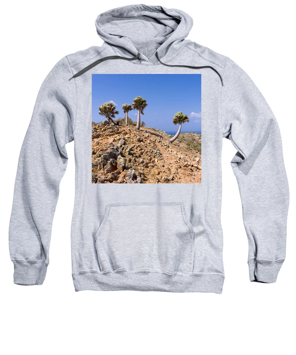 Curacao Sweatshirt featuring the photograph Rare Palm Tress Curacao by For Ninety One Days