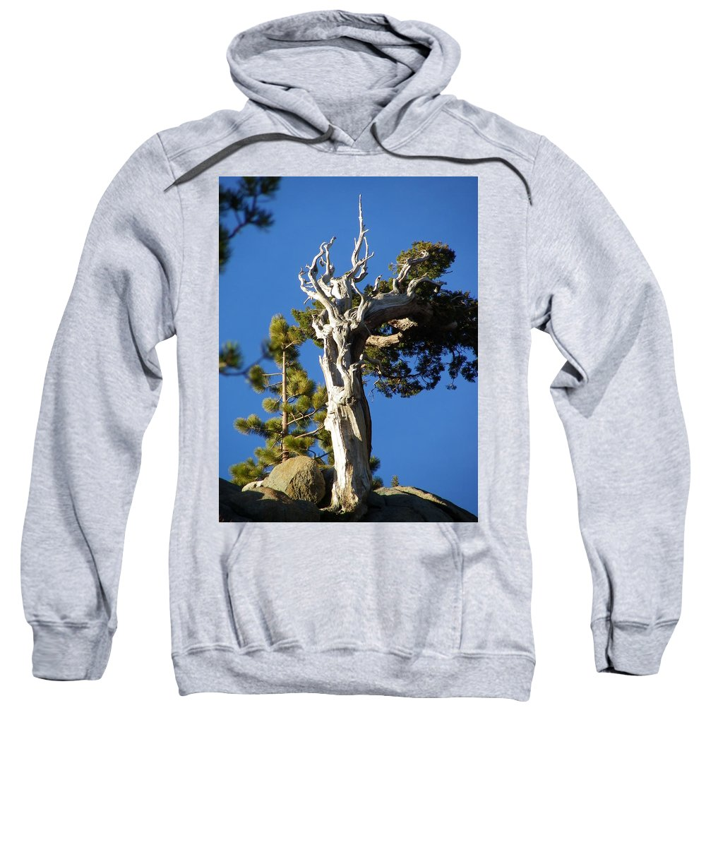 Tree Sweatshirt featuring the photograph Reaching Up by Charleen Treasures