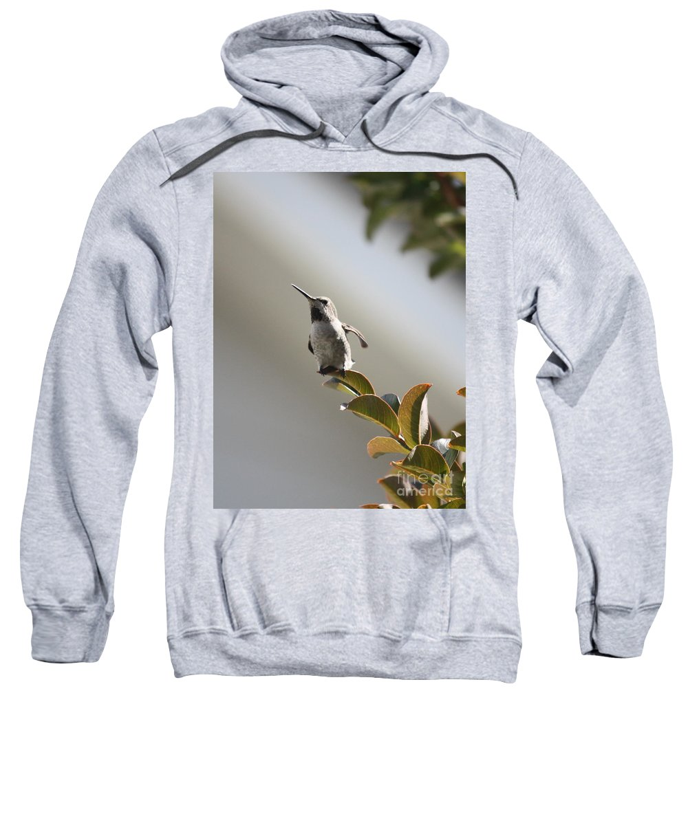 Hummingbird Sweatshirt featuring the photograph Ready For Takeoff by Carol Groenen
