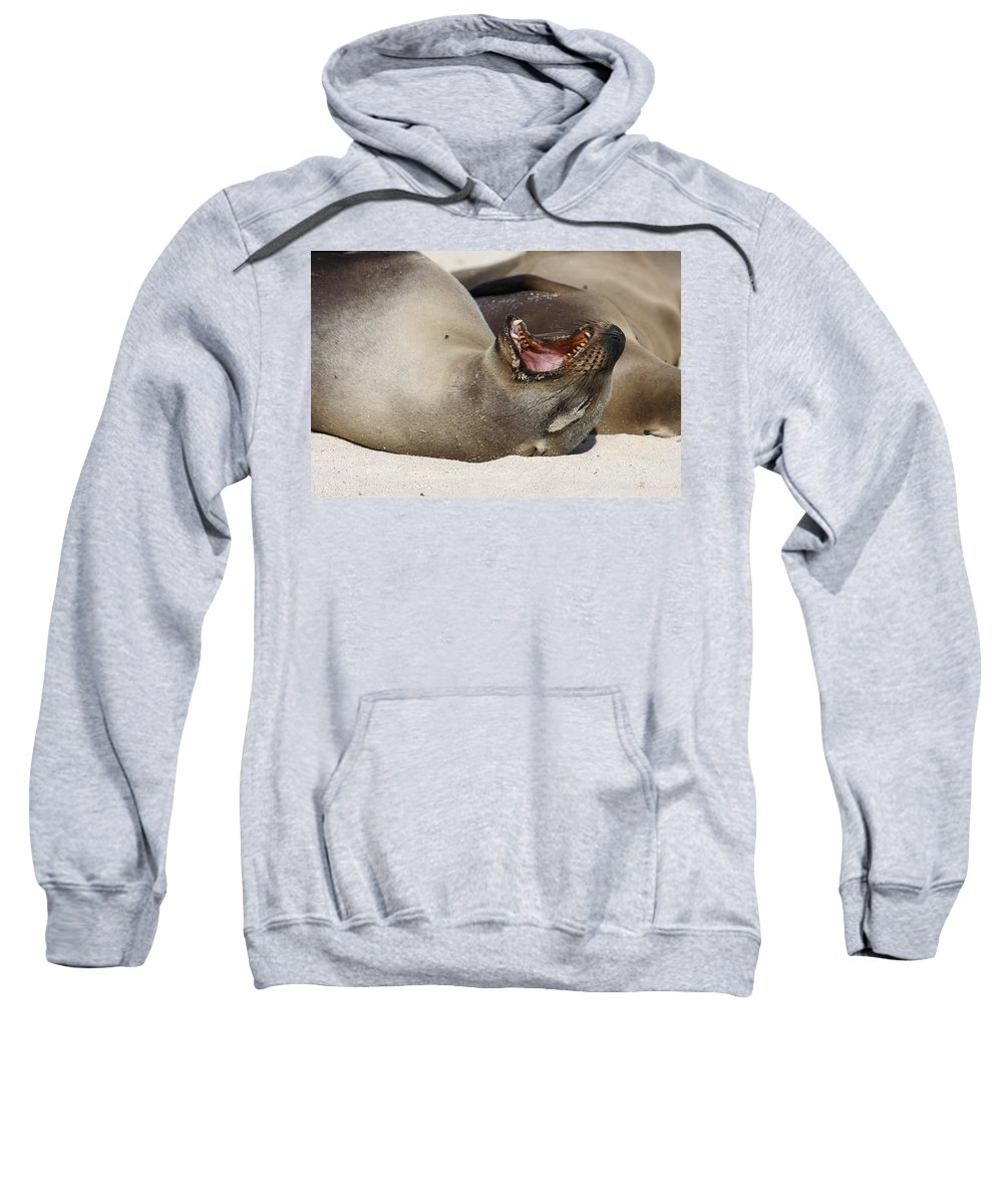 Galapagos Sea Lion Sweatshirt featuring the photograph Ready For The Dentist by Sally Weigand