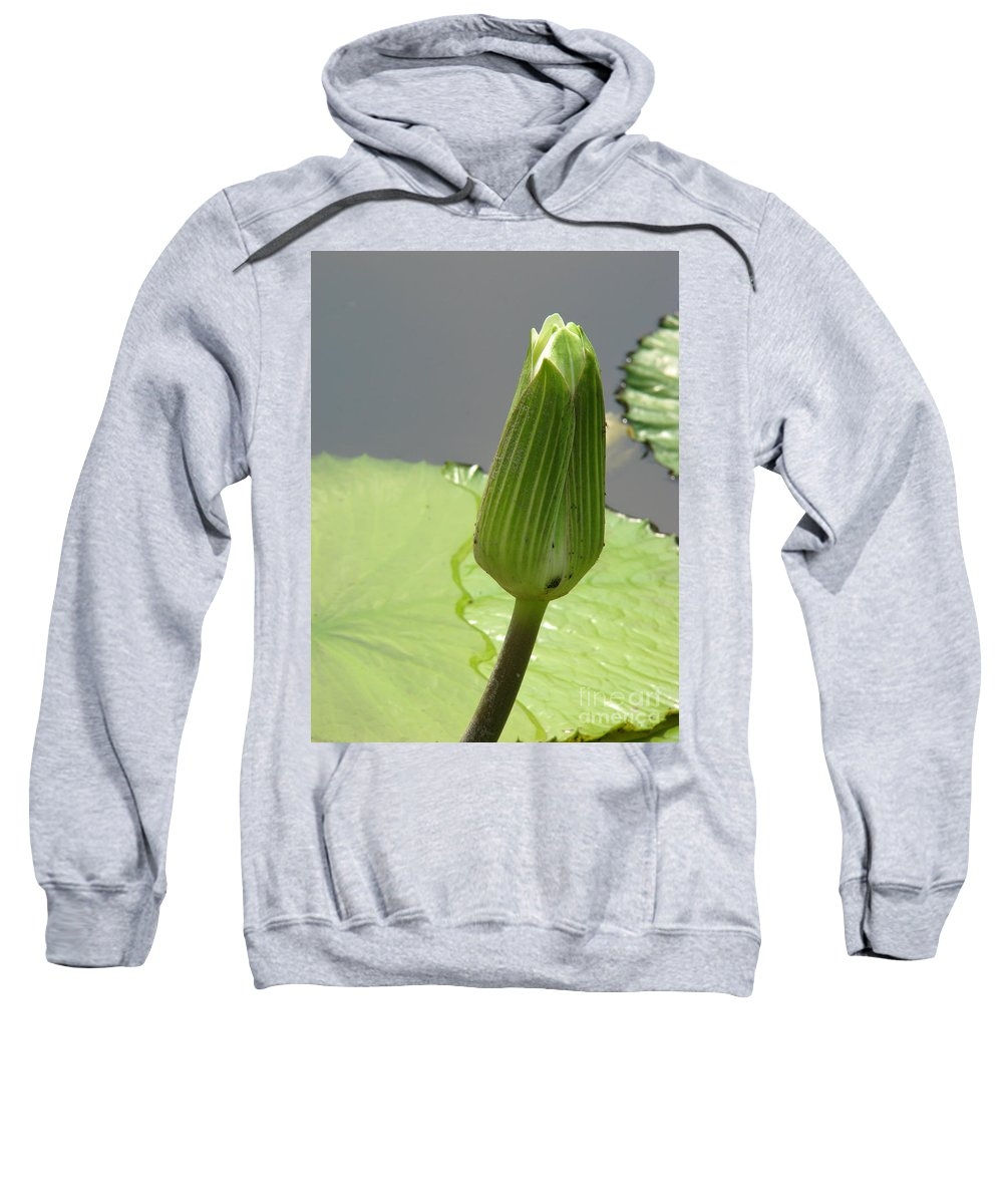 Lilly Sweatshirt featuring the photograph Ready To Bloom by Amanda Barcon