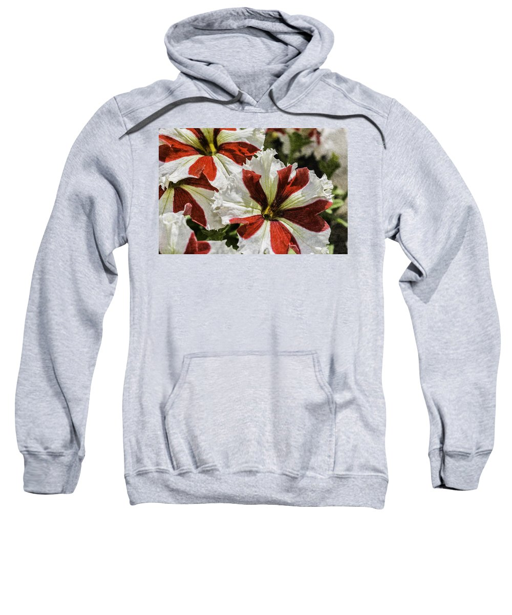 Red And White Petunia Sweatshirt featuring the photograph Red And White Petunia by Steve Purnell