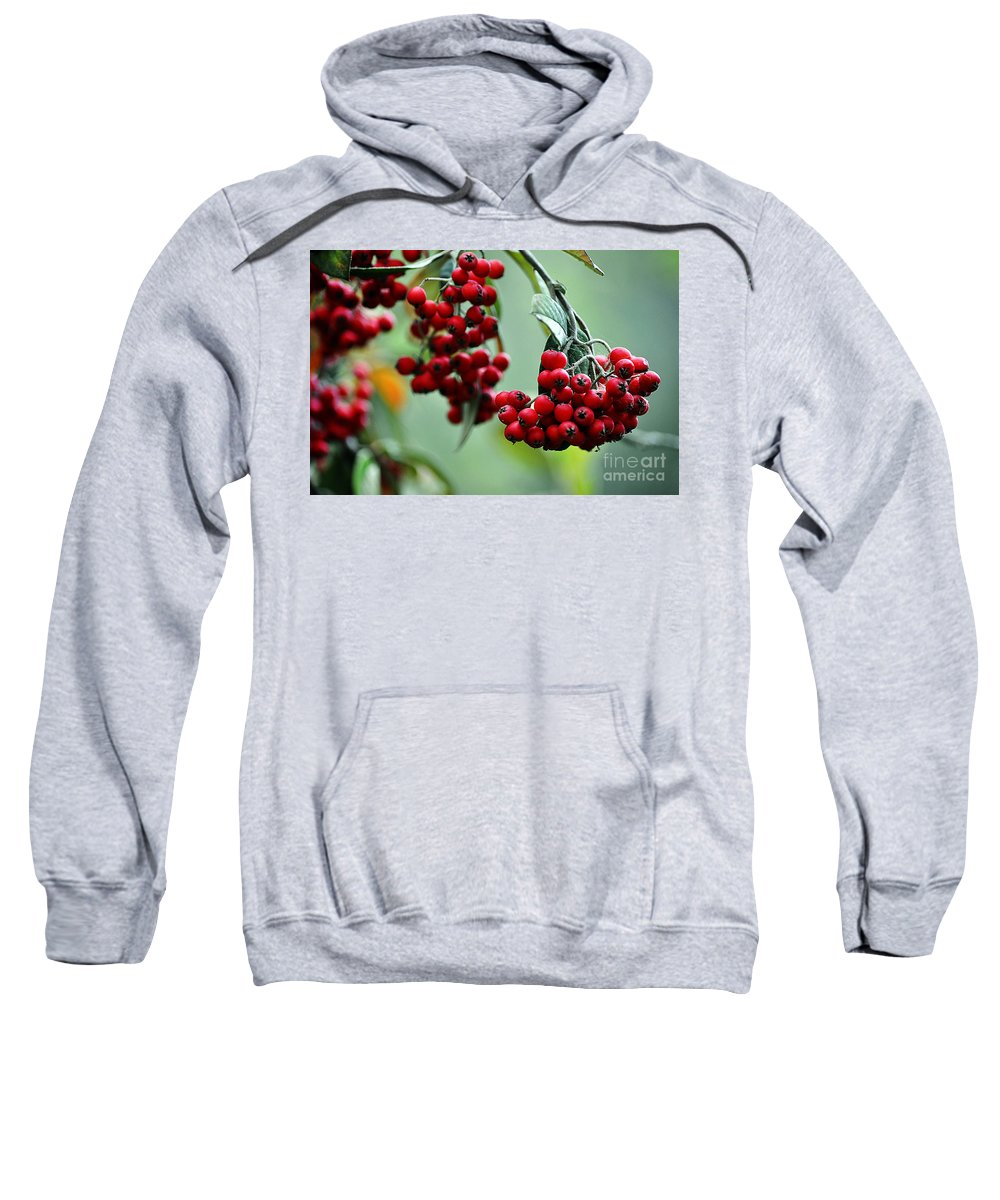 Clay Sweatshirt featuring the photograph Red Berries by Clayton Bruster