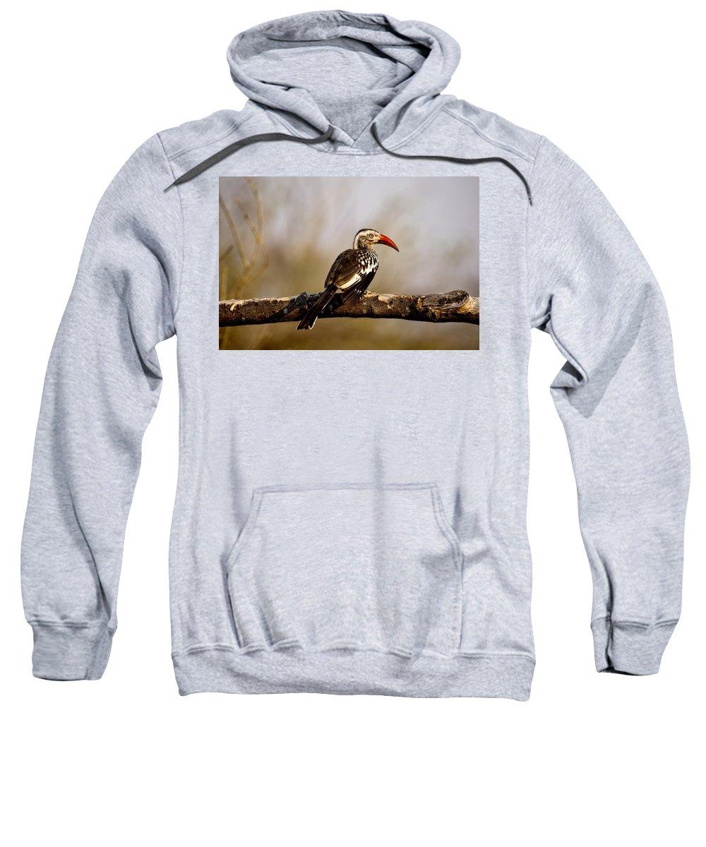 Hornbill Sweatshirt featuring the photograph Red-billed Hornbill by Kay Brewer