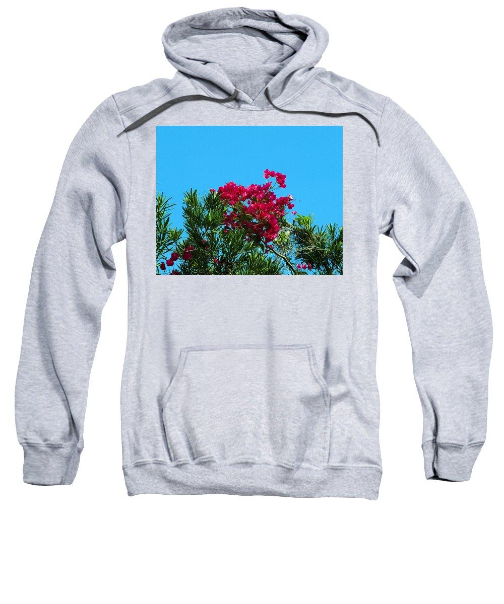 Red; Bougainvillea; Glabra; Juniperus; Vitginiana; Silicicola; Coastal; Cedar; Tree; Vine; Grow; Gro Sweatshirt featuring the photograph Red Bougainvillea Glabra Vine by Allan Hughes