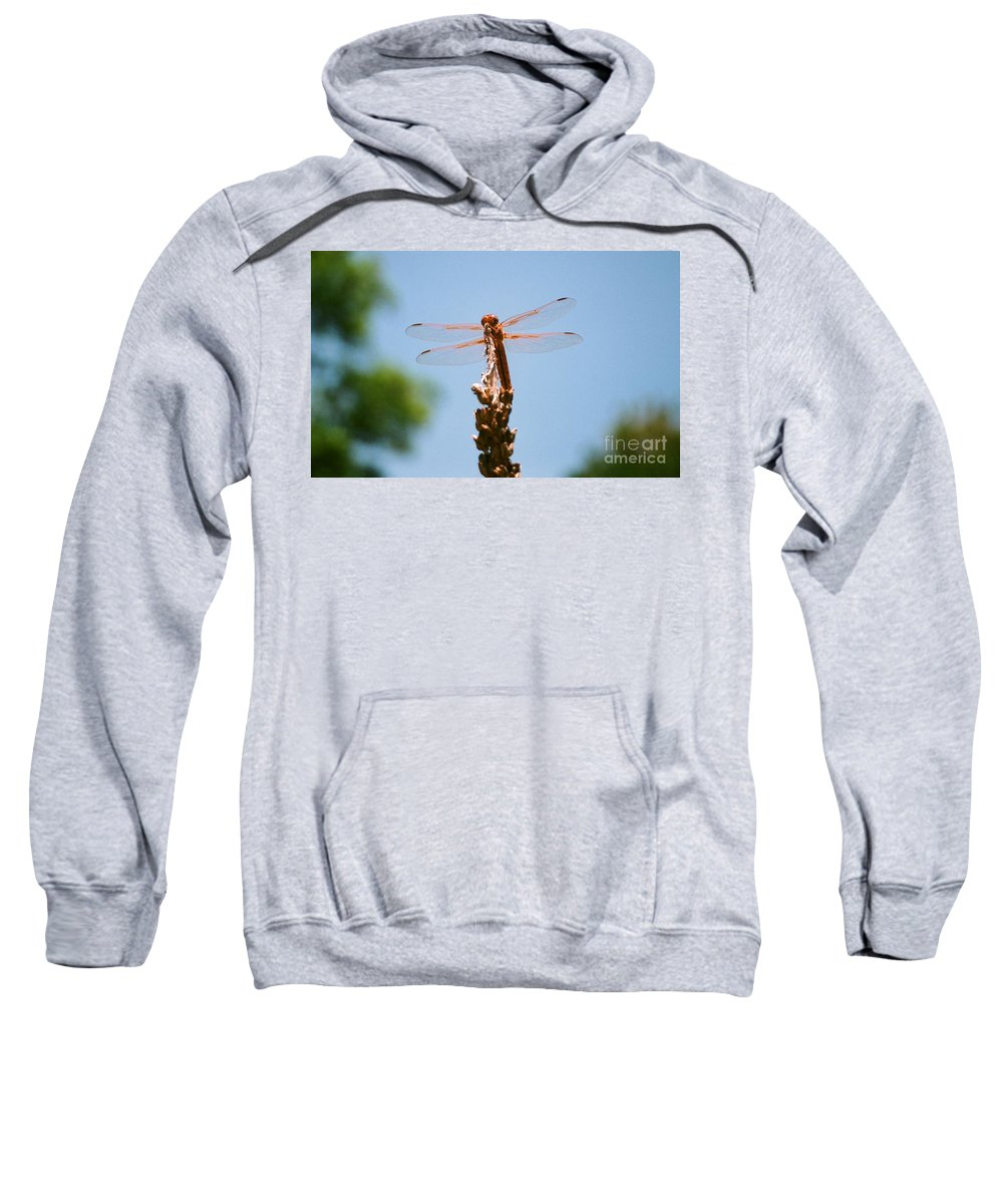 Dragonfly Sweatshirt featuring the photograph Red Dragonfly by Dean Triolo
