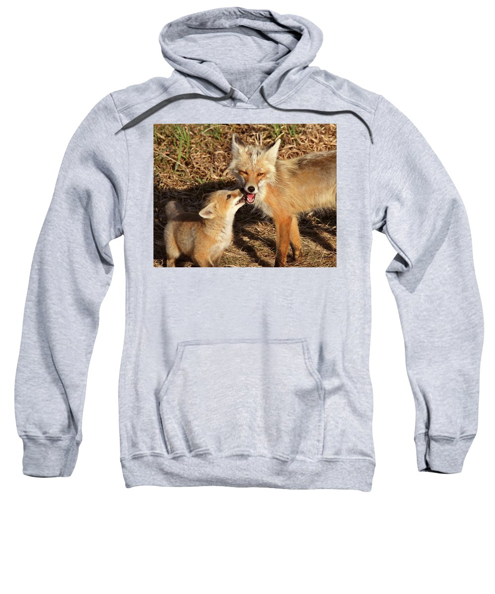 Red Fox Sweatshirt featuring the digital art Red Fox Vixen With Pup On Hecla Island In Manitoba by Mark Duffy