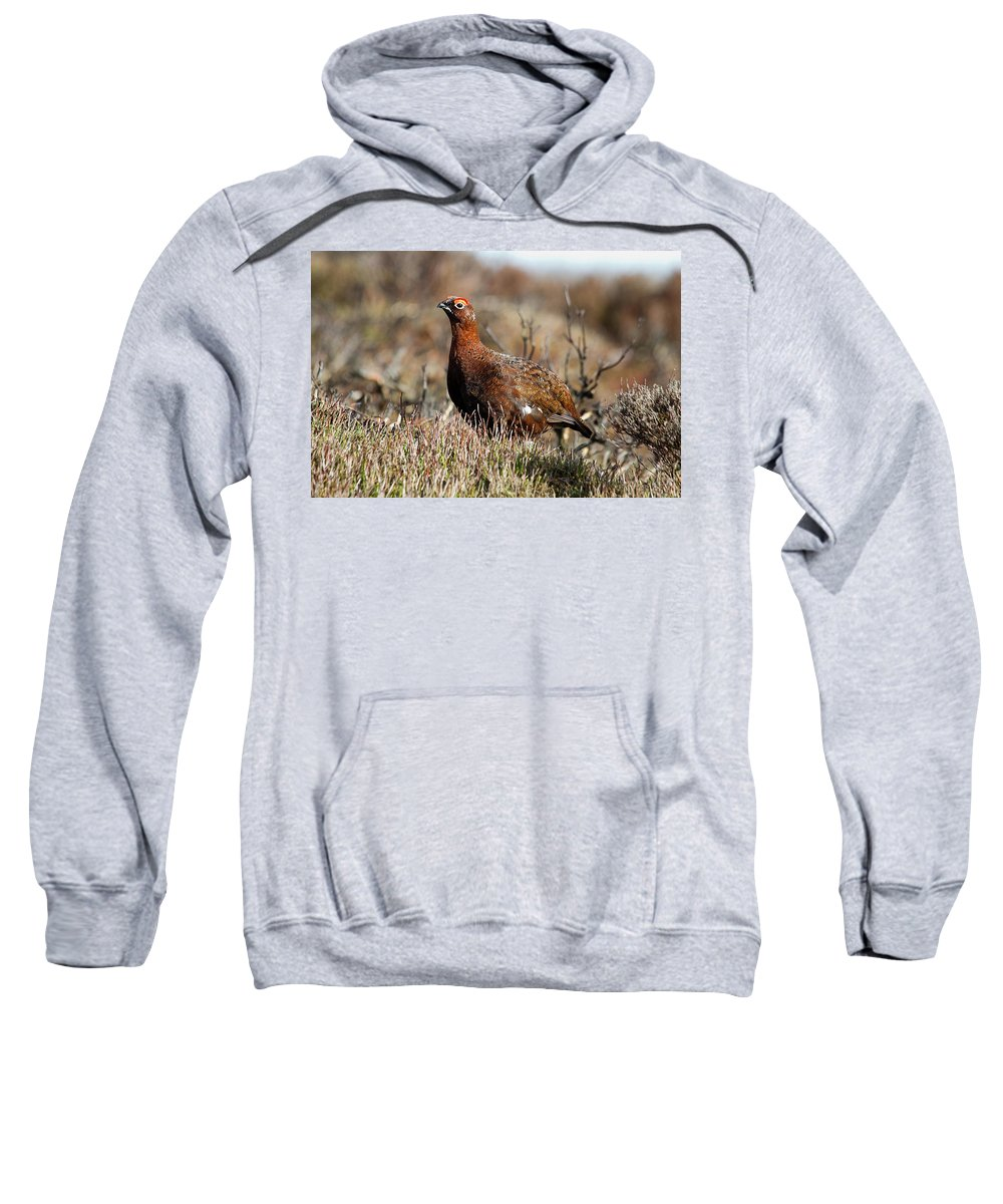 Red Grouse Sweatshirt featuring the photograph Red Grouse by Bob Kemp