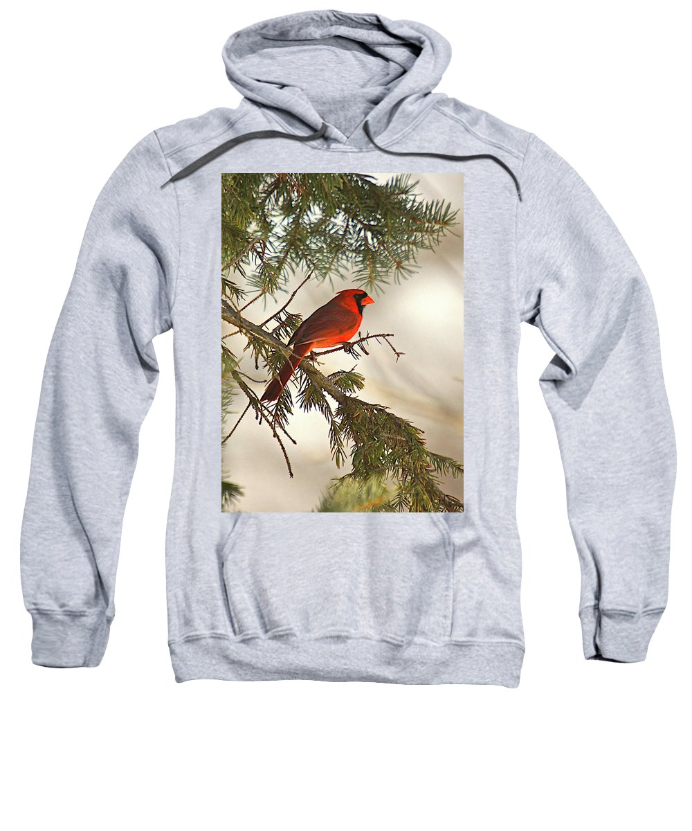 Bird Sweatshirt featuring the photograph Red by Robert Pearson