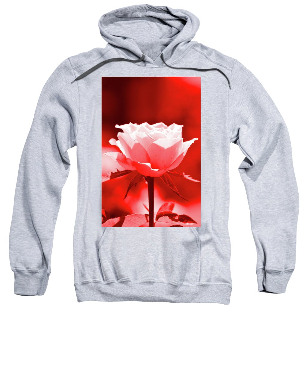 Red Sweatshirt featuring the photograph Red Rose Beauty by Susan Jacob